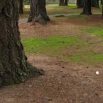 Hidden Tree Root